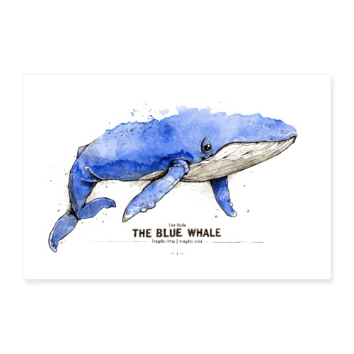 Blauwal (The Blue Whale) - Poster 30x20 cm