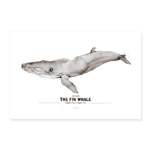 Finnwal (The Fin Whale) - Poster 30x20 cm
