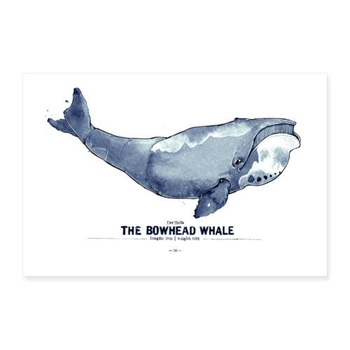 Grönlandwal (The Bowhead Whale) - Poster 30x20 cm