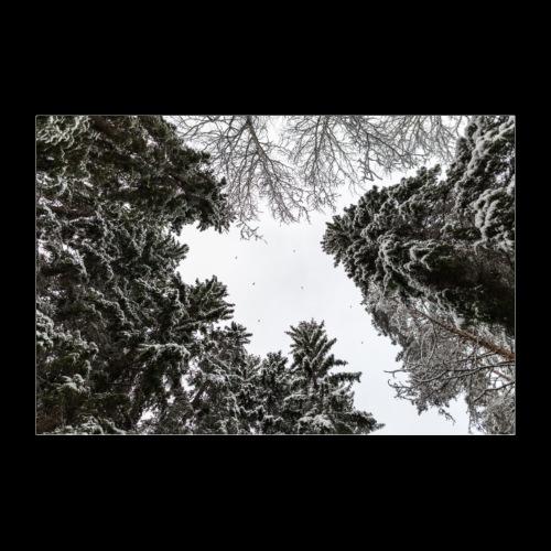 Talvinen metsä - Juliste 30x20 cm