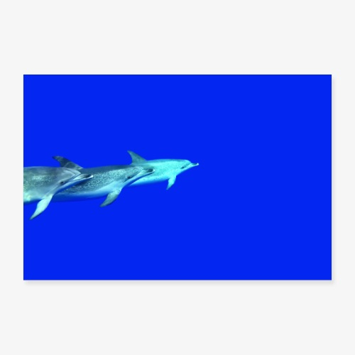 Delfinliebe - Poster 30x20 cm