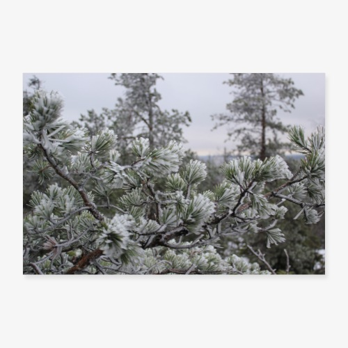 frost - Juliste 30x20 cm