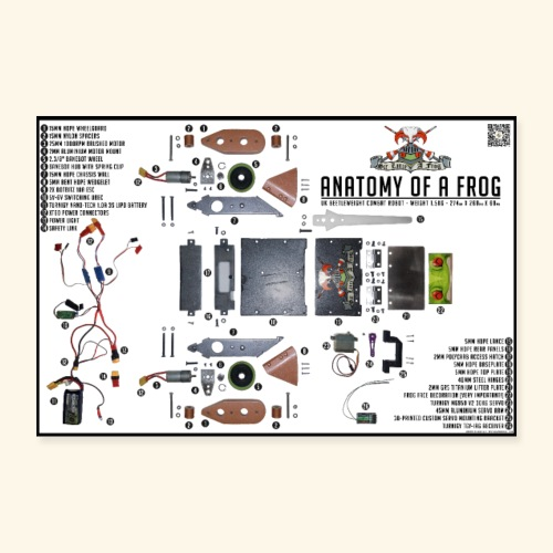 Anatomy of a Frog - Poster 12 x 8 (30x20 cm)
