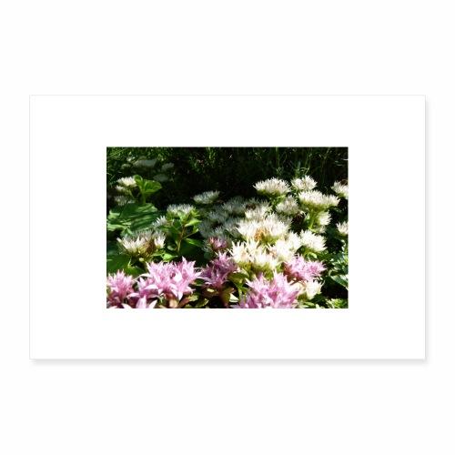 Lotusblumen im See - Poster 30x20 cm