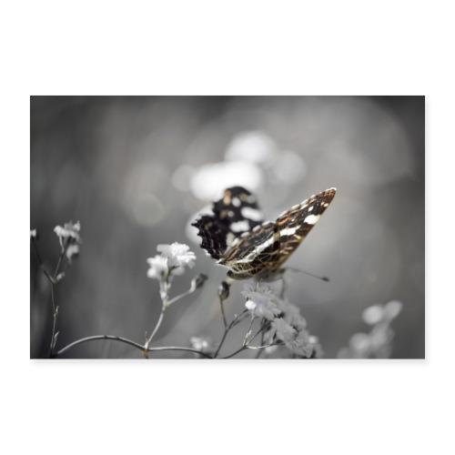 Verträumter Schmetterling - Poster 60x40 cm