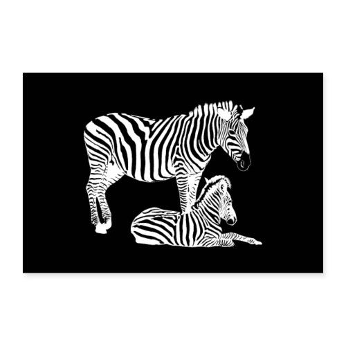 Safari - Zebra Stute mit Fohlen in schwarz weiß - Poster 60x40 cm