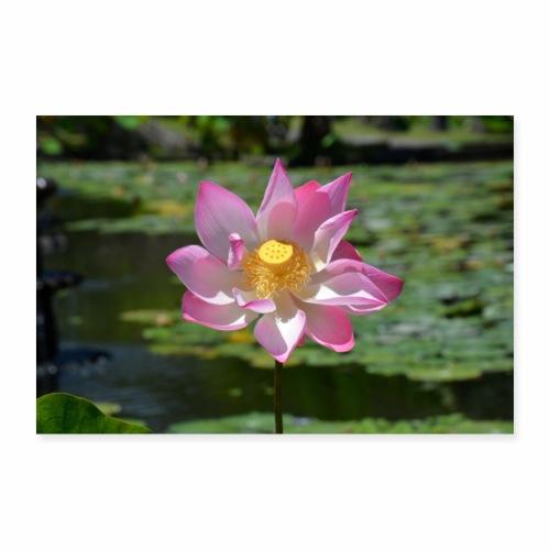 Lotusblüte im Tempel - Poster 60x40 cm