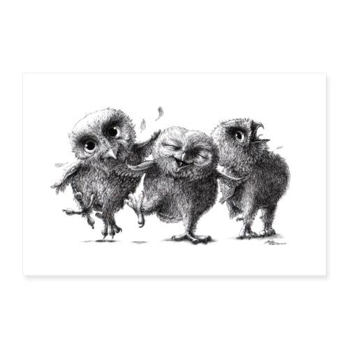 Drei lustige freche Eulen - Poster 60x40 cm