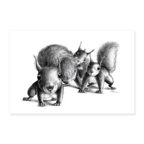 Drei neugierige Eichhoernchen - Poster 60x40 cm