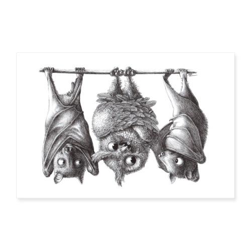 Vampireule und Fledermäuse - Poster 60x40 cm