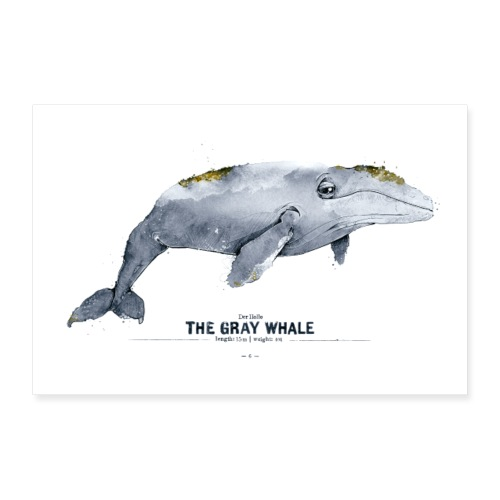 Grauwal (The Gray Whale) - Poster 60x40 cm