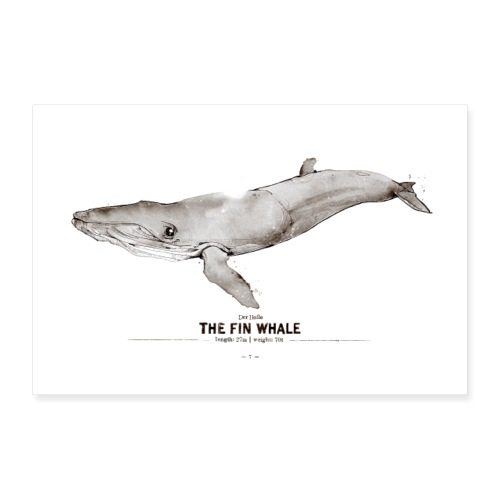 Finnwal (The Fin Whale) - Poster 60x40 cm