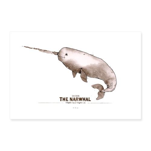 Narwal - Poster 60x40 cm