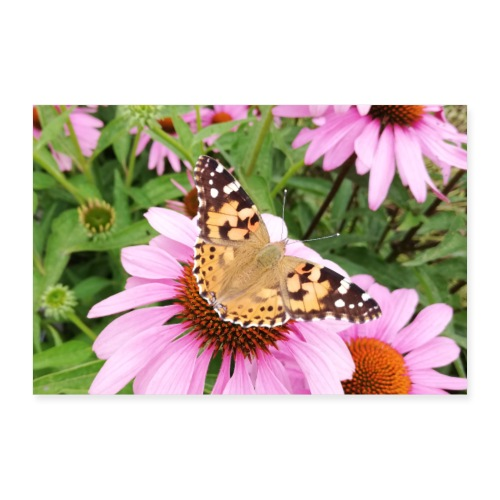 Sommerfugl med solhat - Poster 60x40 cm
