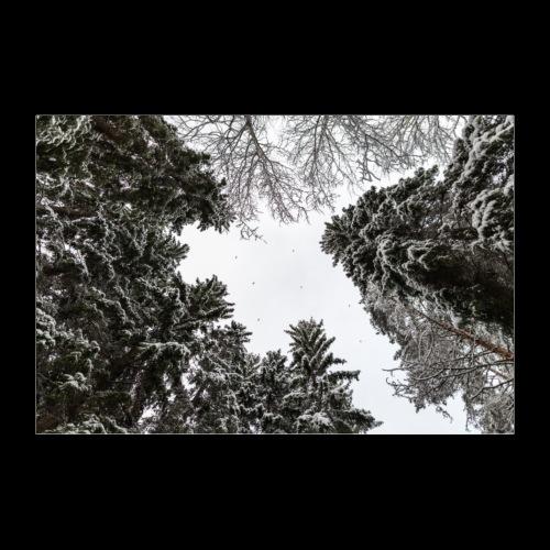 Talvinen metsä - Juliste 60x40 cm