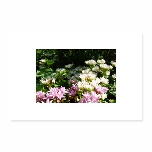 Lotusblumen im See - Poster 60x40 cm