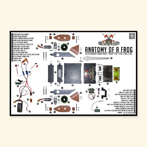 Anatomy of a Frog - Poster 24 x 16 (60x40 cm)