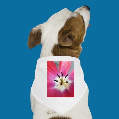 Tulipe Darwin - Bandana pour chien
