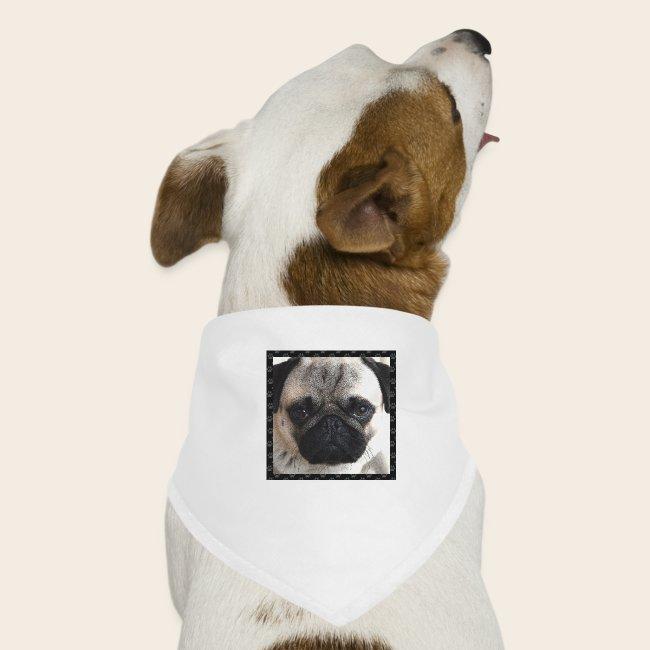 Mops Hund 2