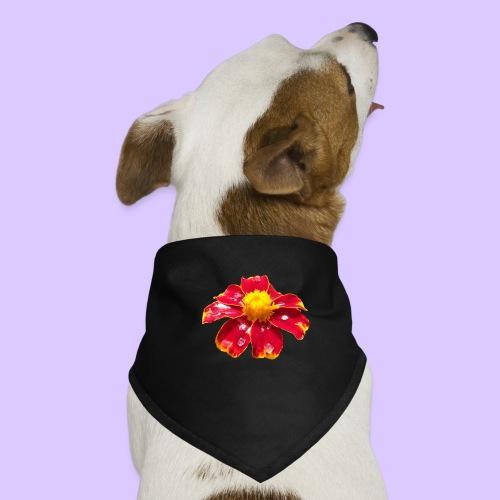 rote Ringelblume mit Regentropfen, Blume, Blüte - Hunde-Bandana