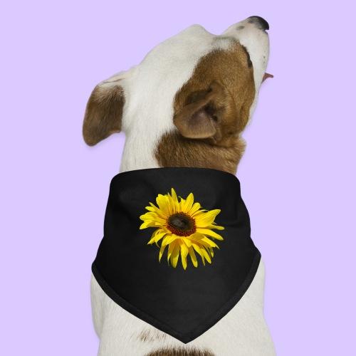blühende Sonnenblume, Sonnenblumen, Blumen, Blüten - Hunde-Bandana