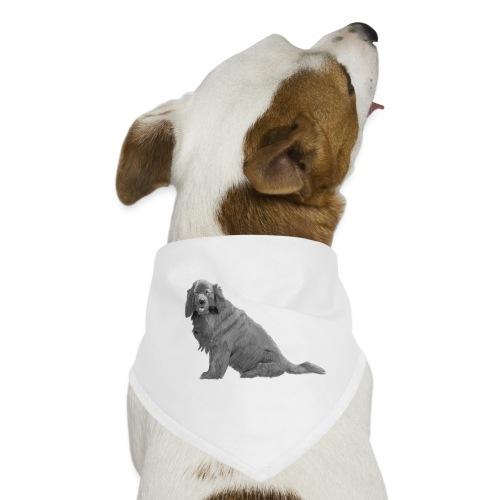 newfoundland - Bandana til din hund