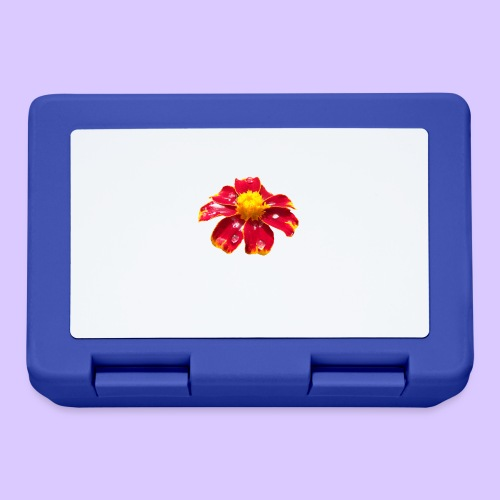 rote Ringelblume mit Regentropfen, Blume, Blüte - Brotdose