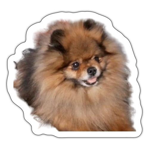 Pomeranian - Klistermärke