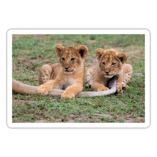 Lion cubs - Pegatina