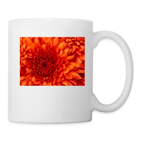 Chrysanthemum - Taza
