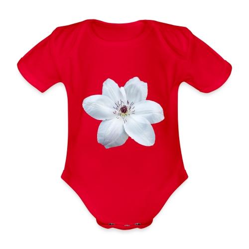 Jalokärhö, valkoinen - Vauvan lyhythihainen luomu-body