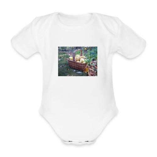 Quitten-Korb - Baby Bio-Kurzarm-Body