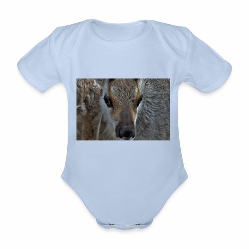 Reinkalv - Økologisk kortermet baby-body