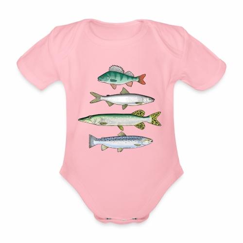 FOUR FISH - Ahven, siika, hauki ja taimen tuotteet - Vauvan lyhythihainen luomu-body