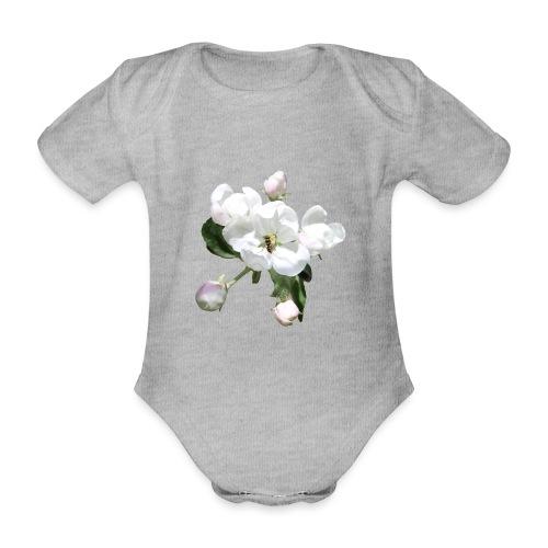 Omenankukka ja kukkakärpänen - Vauvan lyhythihainen luomu-body