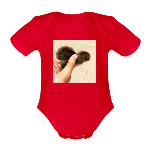 Freedom - Kortærmet babybody, økologisk bomuld
