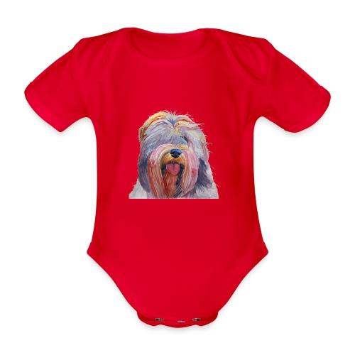 schapendoes - Kortærmet babybody, økologisk bomuld