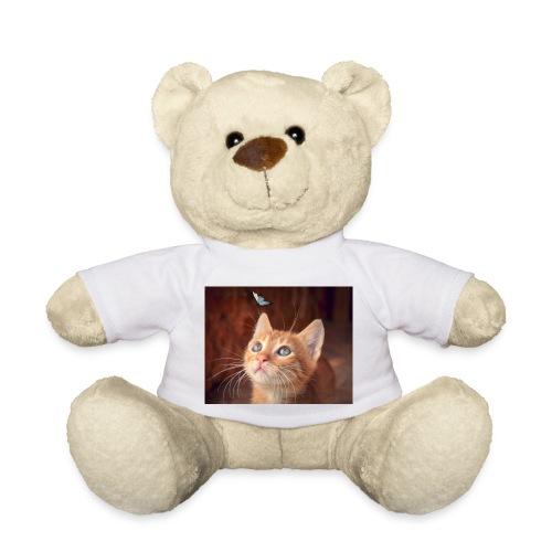 Kätzchen - Teddy