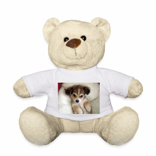 dog - Miś w koszulce