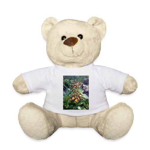 Primel - Teddy