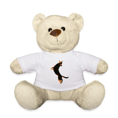 Entlebucher - Nallebjörn