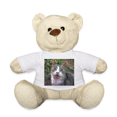 Katze Max - Teddy