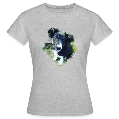 colliegermanshepherdpup - Women's T-Shirt