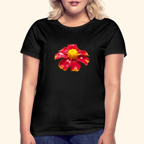 rote Ringelblume mit Regentropfen, Blume, Blüte - Frauen T-Shirt