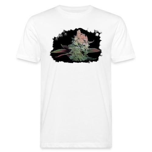 Pflänzchen png - Männer Bio-T-Shirt