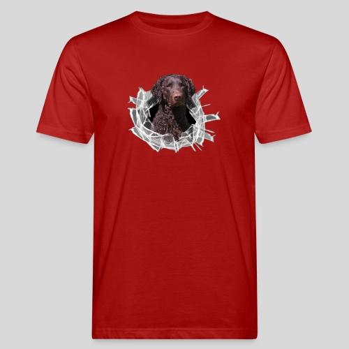 Curly Coated Liver im Glasloch - Männer Bio-T-Shirt
