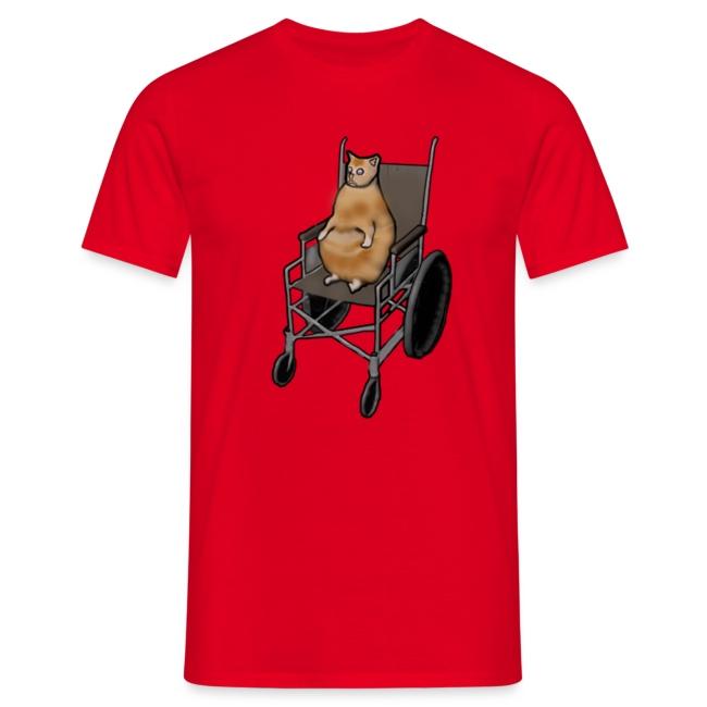 Wheelchair Cat