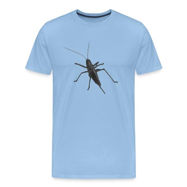 Heuschrecke Insekt Tier Grashüpfer Langfühler