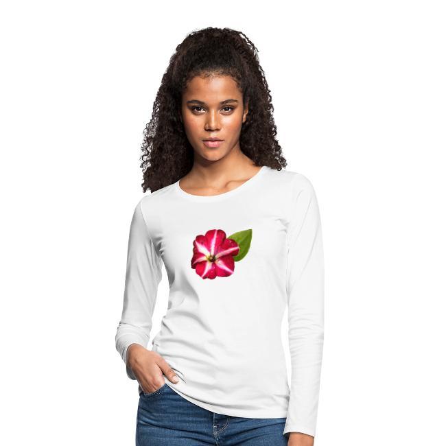 Petunie rot weiß Blume