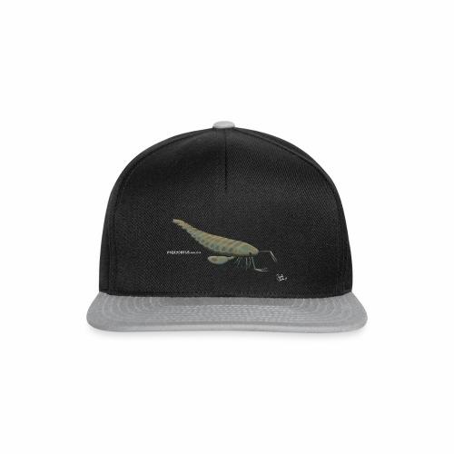 Pterygotus - Snapback Cap